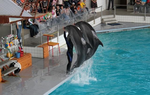 Набережные Челны. Дельфинарий