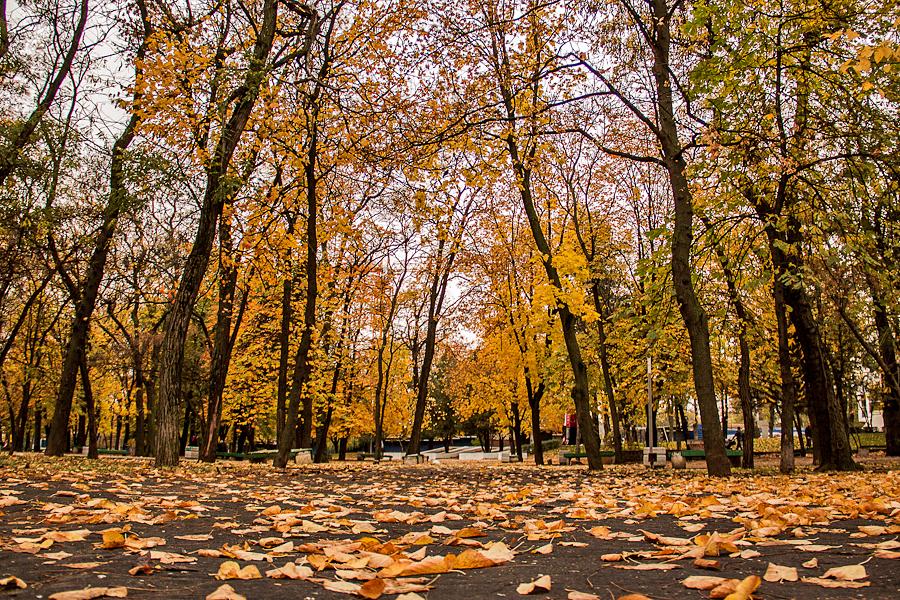 фото осень в ростове на дону