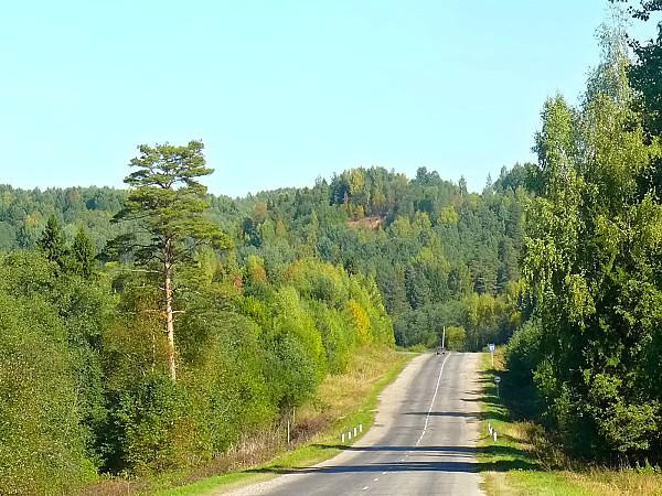 Костромские леса
