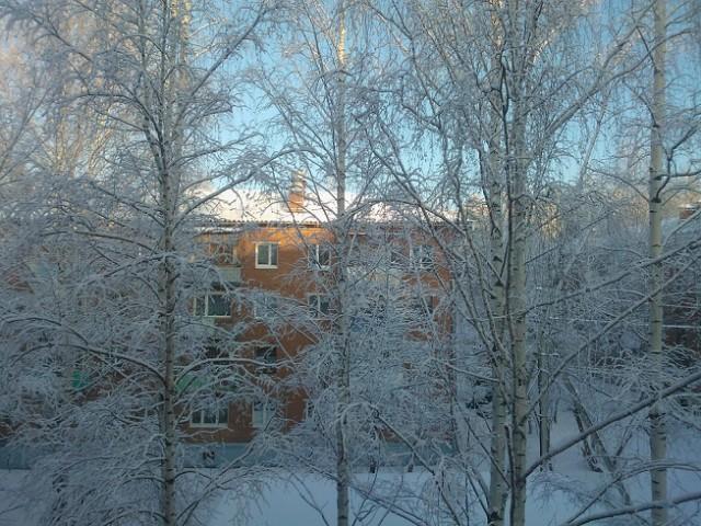 Зима в Березовке