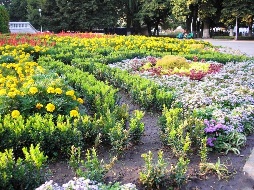 Армавир - город цветов