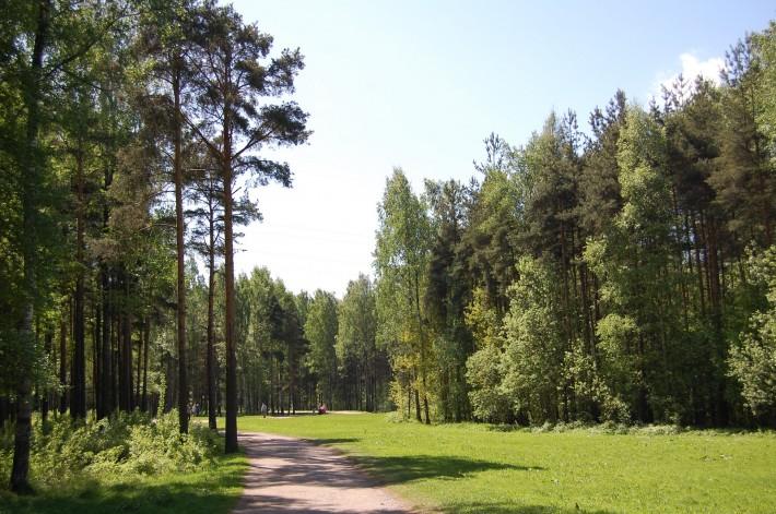 Парк Сосновка