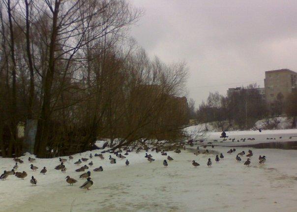 Наступление зимы в городском парке