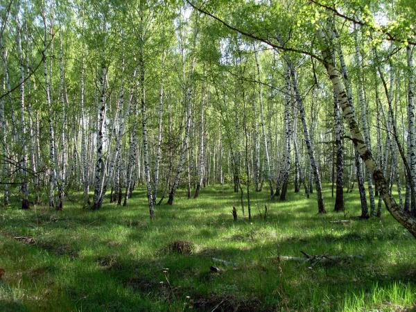 Кузьминский лесопарк: зеленые легкие ЮВАО
