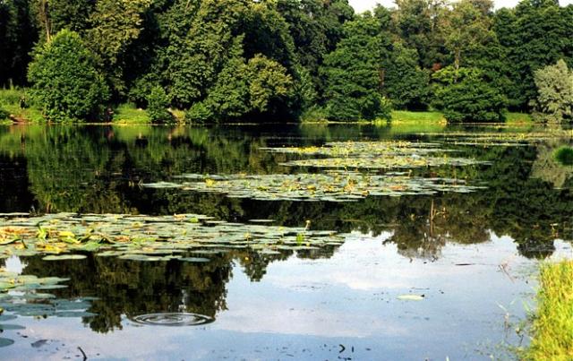 Кузьминский пруд