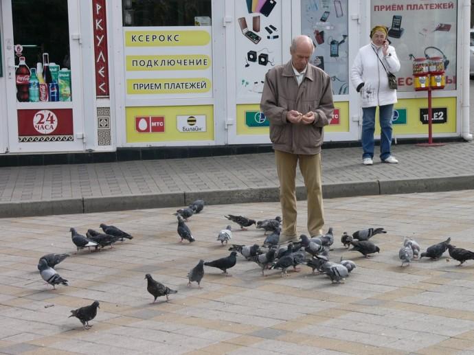 Голуби - единственное развлечение с плохой погодой это кормить голубей