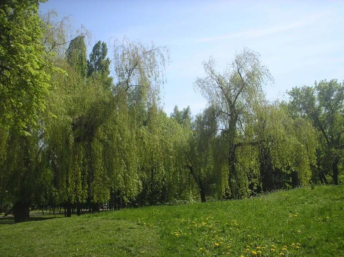 Природа Белгородской области