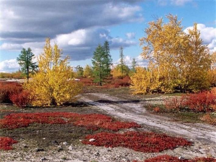 Вот такая золотистая осень на севере