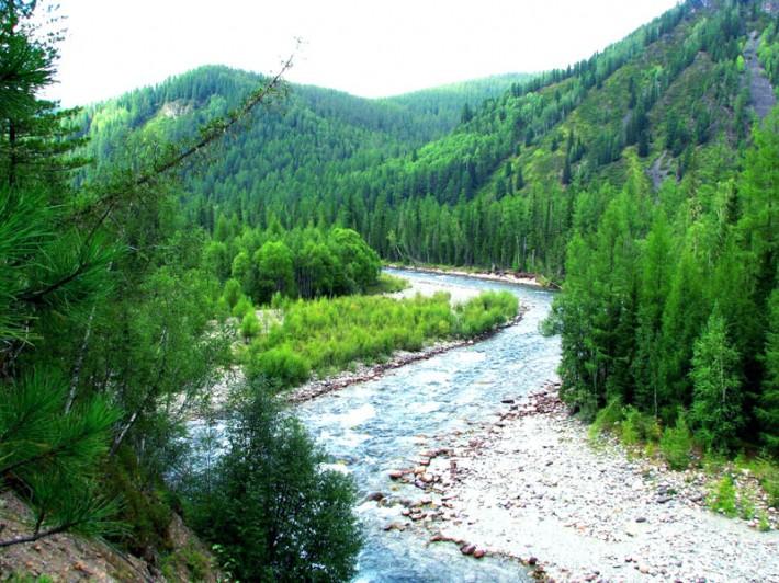 Изумрудные леса Алтая