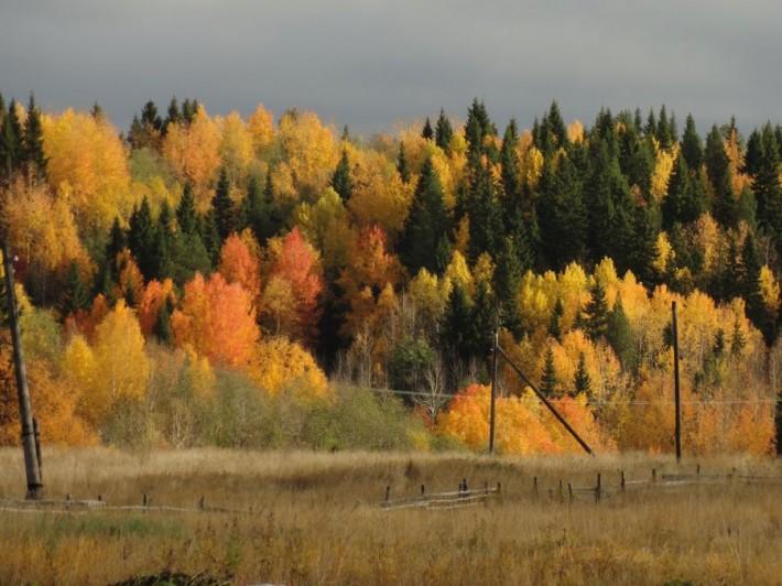 В лесу под Архангельском