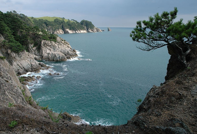 Сосны и море — типичный приморский пейзаж