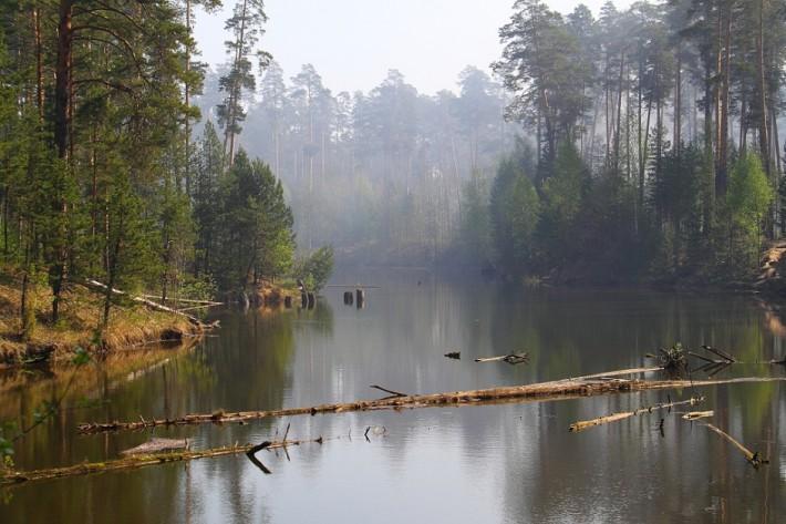 Треть территории Чувашии покрыта лесами