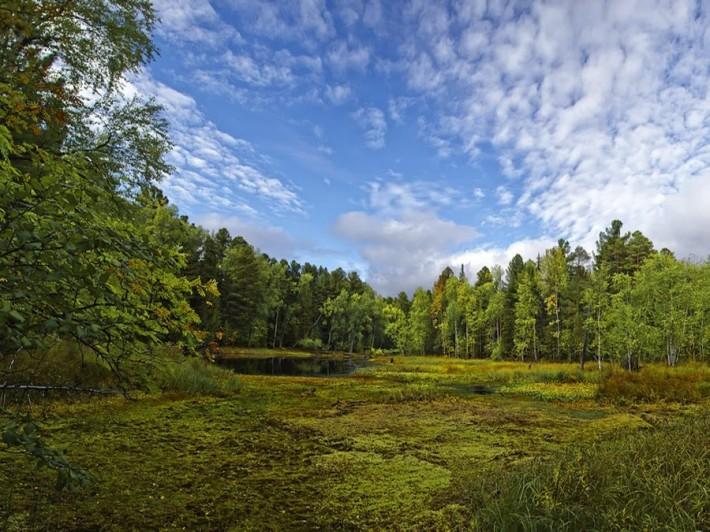 Васюганское болото — одно из самых больших болот в мире