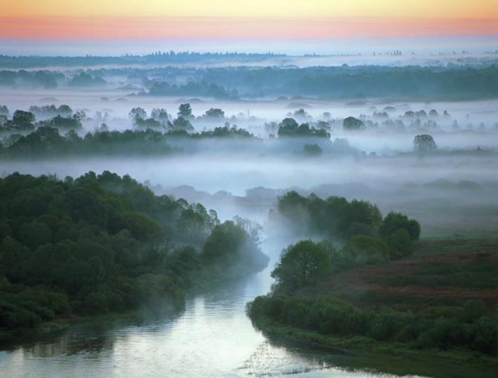 Раннее утро в заповеднике «Брянский лес»