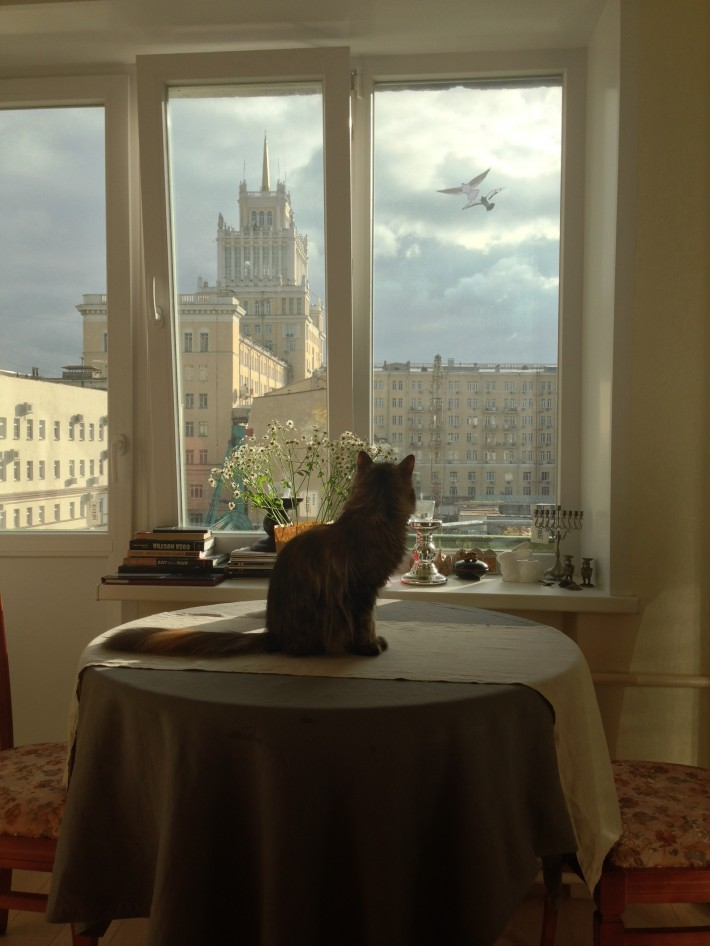 Наша кошка Катя и вид из окна