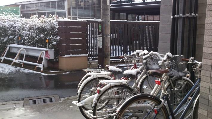 Заснеженные велосипеды. Правда, их хозяев даже снег не останавливает