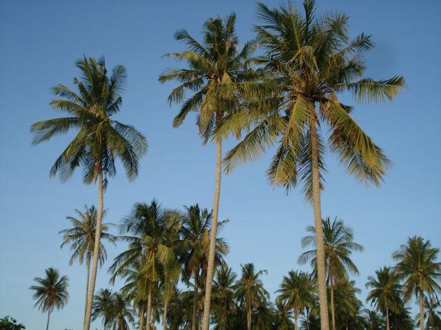 Многие соотечественники стремятся пожить подольше под пальмами Таиланда