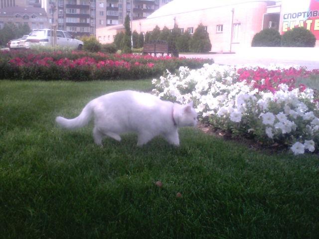 Наш кот-путешественник изучает окрестности возле дома