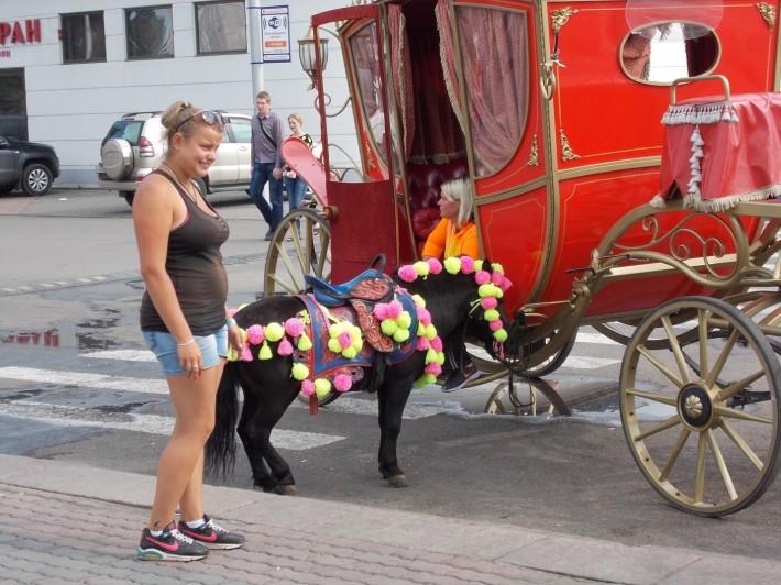 Прокат лошадей и карет на набережной Енисея