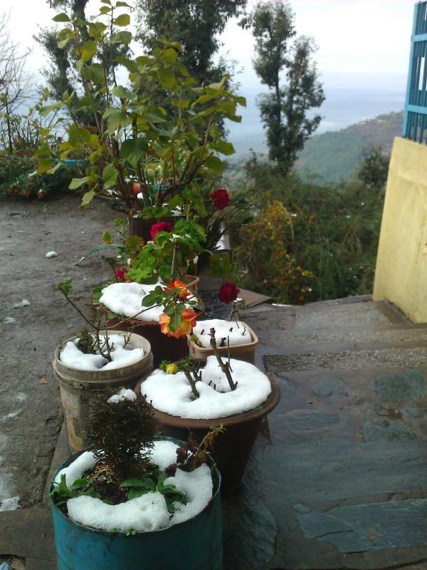 Январь, первый снег. Вообще снег - довольно редкое явление в Дарамсале