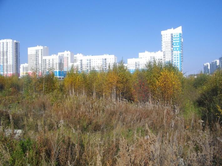 Лесопарковая зона рядом с высотками