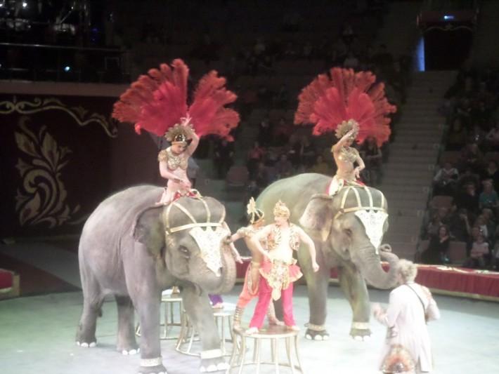 В цирке. Слоны Корниловых.