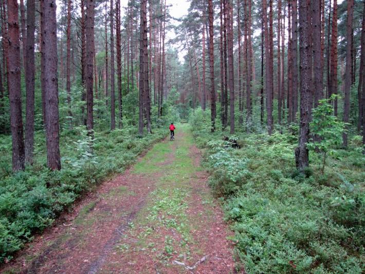 Лес, воздух, велосипед