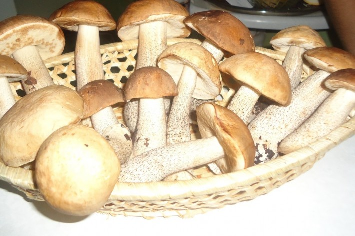 Нюрбинские грибочки