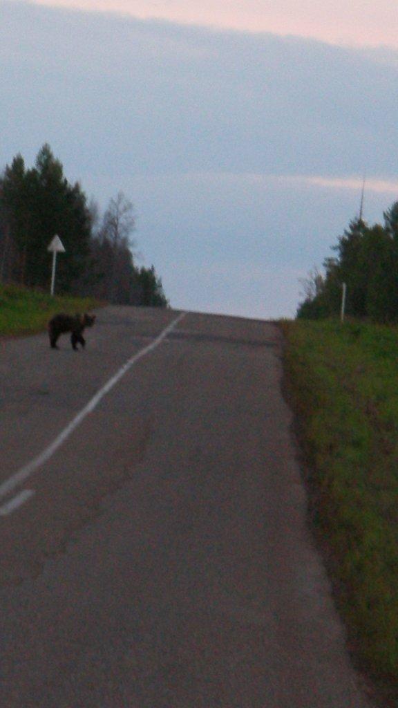 Это не Photoshop, это медведь