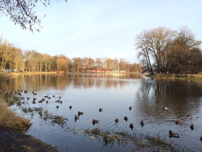 Вид на городское озеро