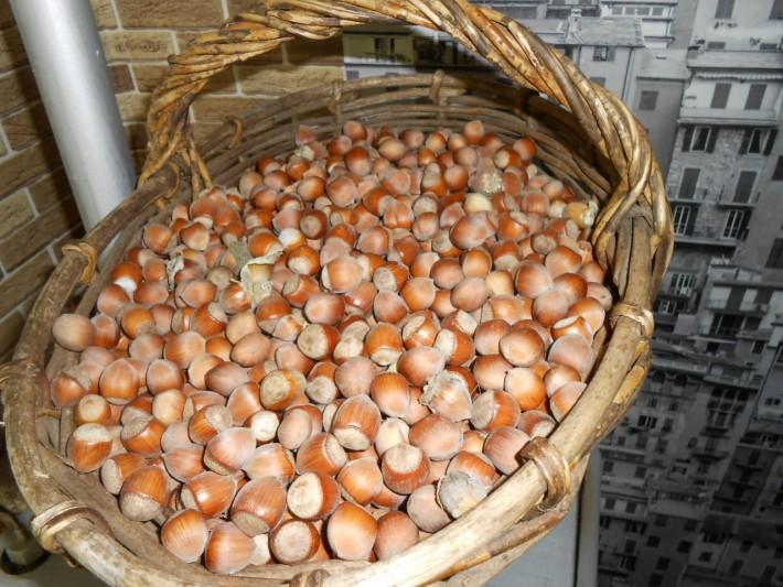 На севере грибы корзинами, здесь - орехи!