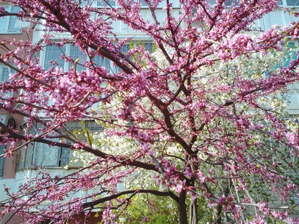 Краснодар весной