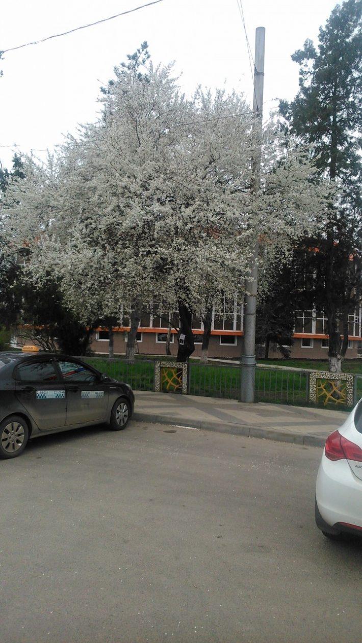 Вот так в Краснодаре цветут деревья в марте