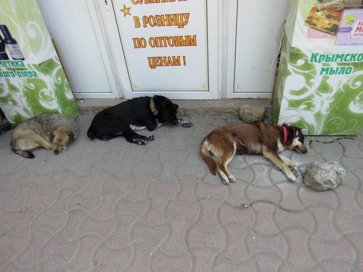 Собаки в Евпатории.