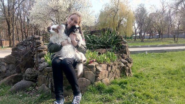 Переезд с собаками