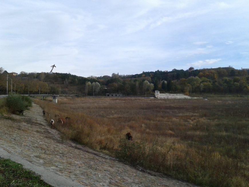 Этот пустырь с коровами и есть Старое озеро