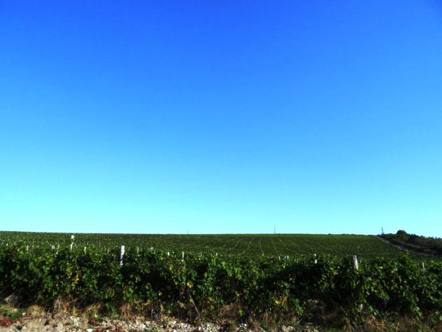 Виноградники недалеко от поселка Сукко