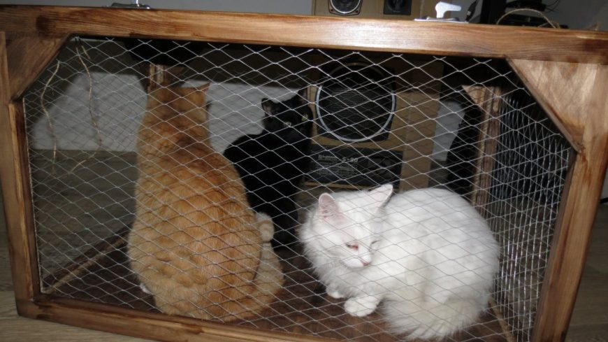 Для транспортировки тройного кота в машине мы изготовили большую переноску
